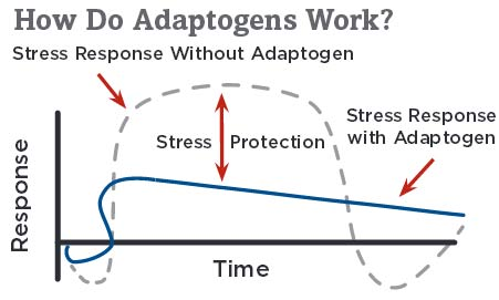 how adaptogens work